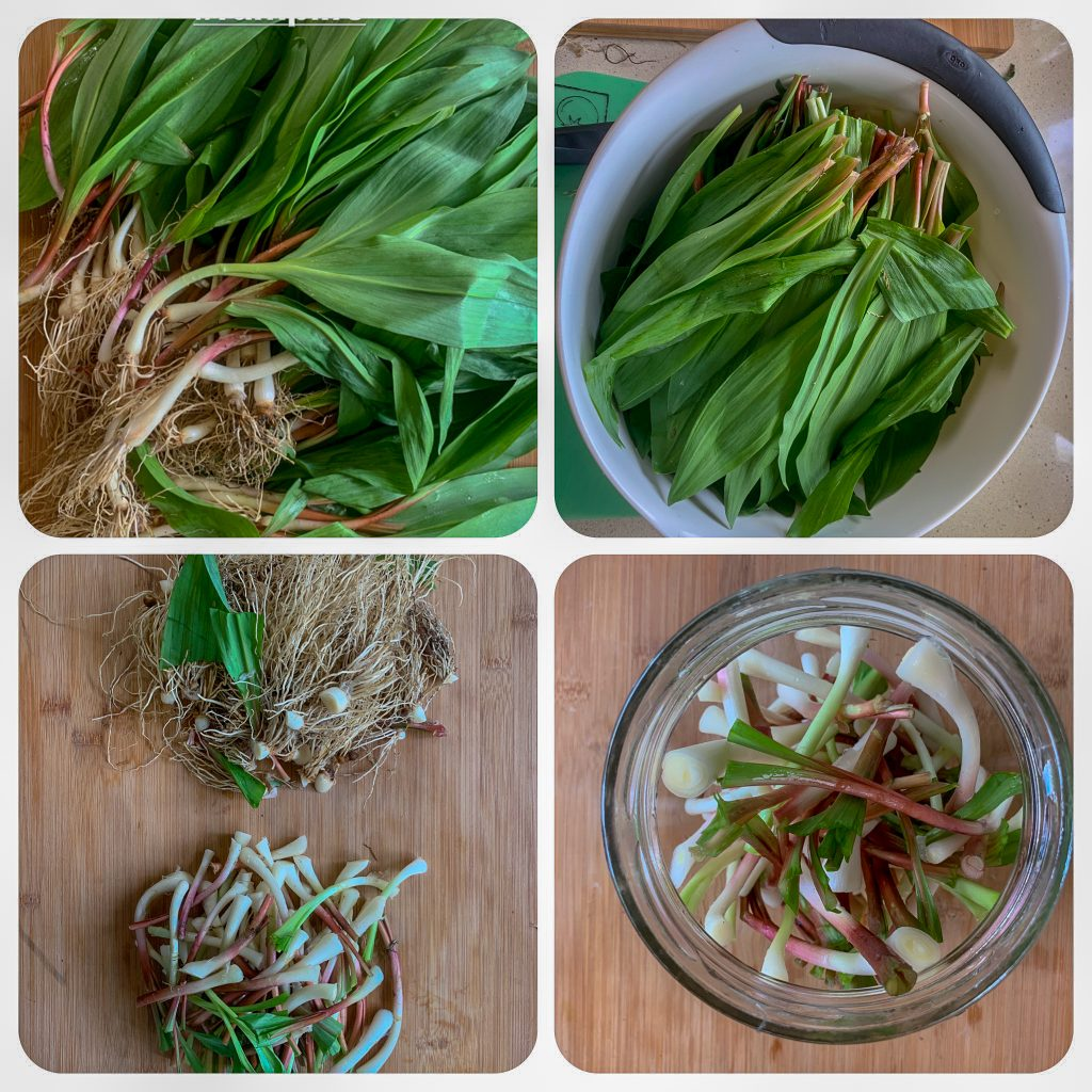 Ramp Recipes: Pickled and Pesto