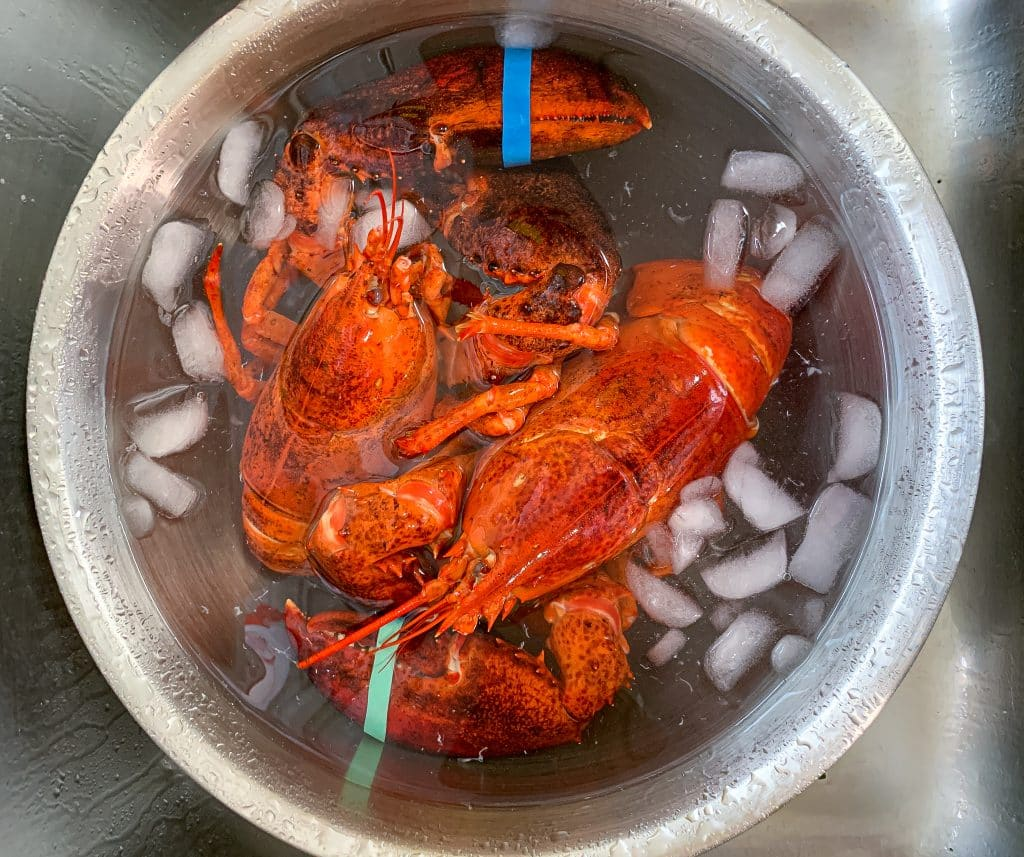 Lobsters chilled in ice bath to stop the cooking process