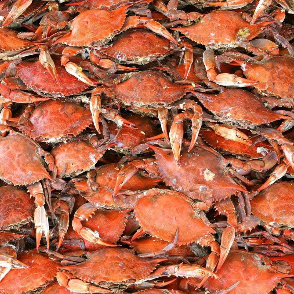 pill of red crabs